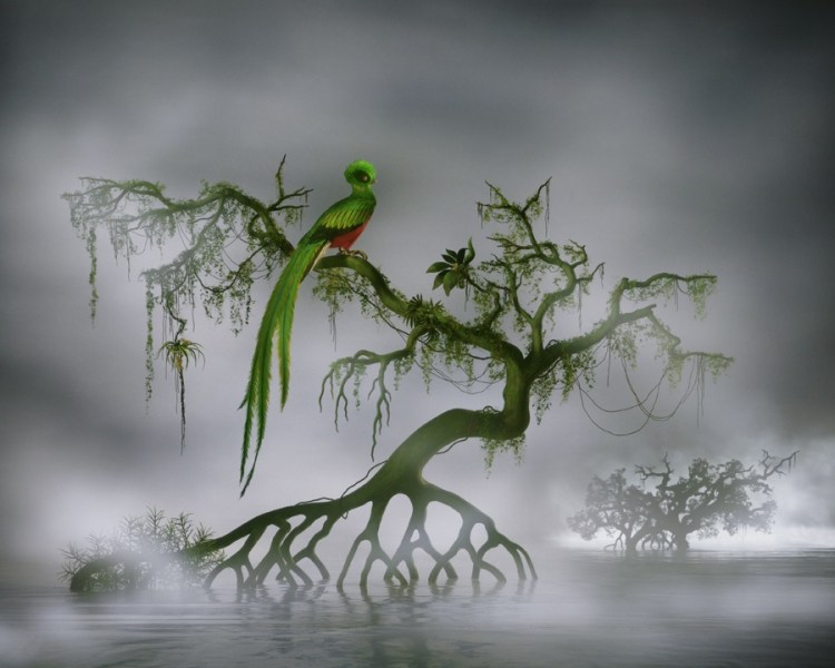 L' Olseau (The Bird), 2008 © Didier Massard