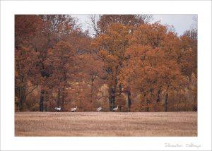 Preset - Couleurs d'automne (Leger)