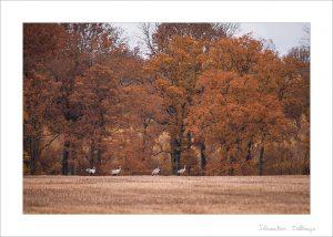 Preset - Couleurs d'automne (Moyen)