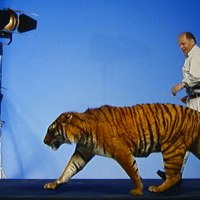 Jacana Wildlife Studios cherche un repreneur