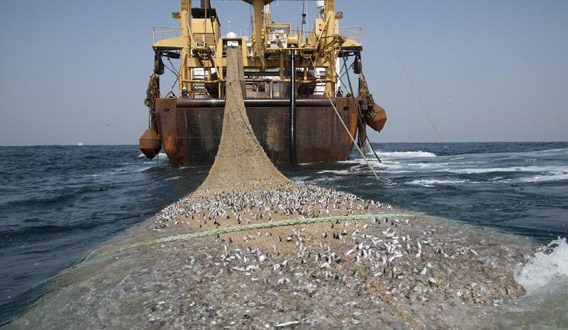Pêche intensive en Afrique de l'Ouest