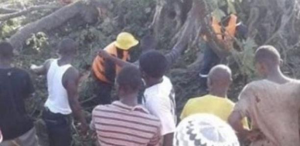 Ngomène : deux enfants écrasés par un baobab