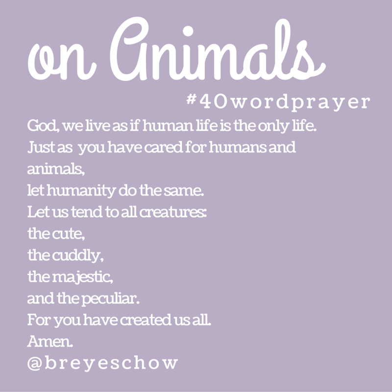 #40WordPrayer on Animals — Bruce Reyes-Chow