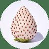 白イチゴ エキス (保湿成分)
