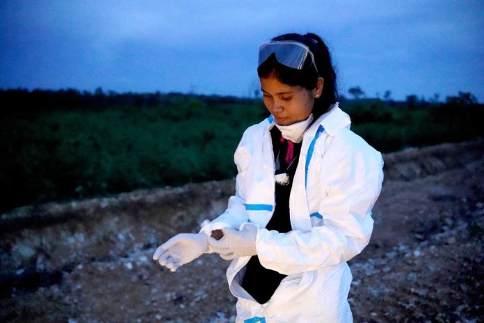 Thavry Hoem, a field study coordinator at the IPC, puts on personal protective equipment before collecting bats.