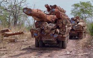 Đoàn xe chổ gỗ lậu vượt biên giới Lào vào Việt Nam. RFA screen cap/EIA video