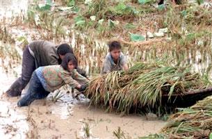 """Người nông dân chắt chiu, góp nhặt từng hạt lúa...""""Con cò lặn lội bờ sông..."""