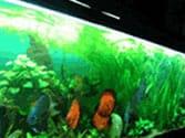 Low Light Low Maintenance Habitat for 50 - 60 Gallon Aquarium