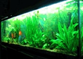 South American Habitat for 50 - 60 Gallon Aquarium