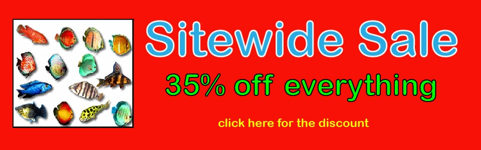spring-sitewide-sale