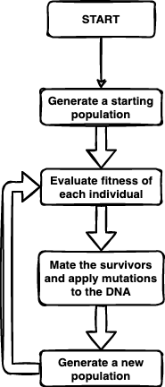 flowchart showing how evolutionary algorithms begin by generating a population, then the fitness of each individual is evaluated, then the survivors are mated and mutations are applied to their offspring, and this finally creates a new generation. An arrow from their loops back to evaluating the fitness of each indivudual again