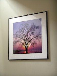 tree in dusk
