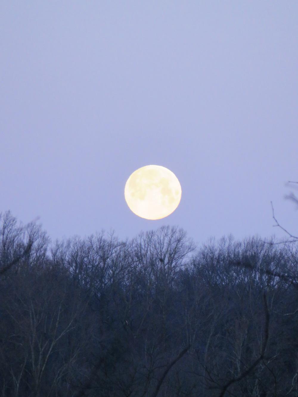 3月31日の満月。夜明けの朝7時ごろでも見れました。こちらの朝は、夏時間のため、明るくなるのが遅いんですね。