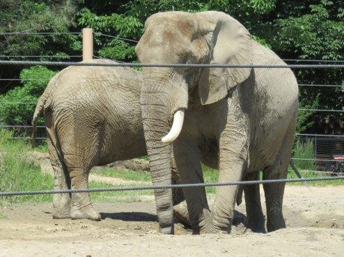 メトロパークス動物園のゾウさん達。