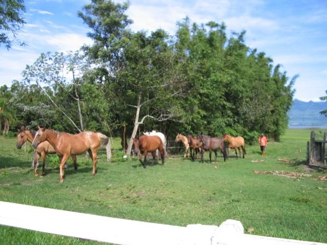 cavalos-pousada-da-lagoa-arroiodosal