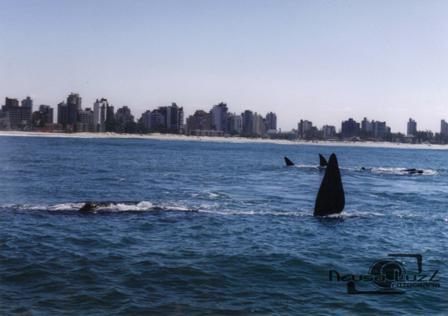 baleias capa