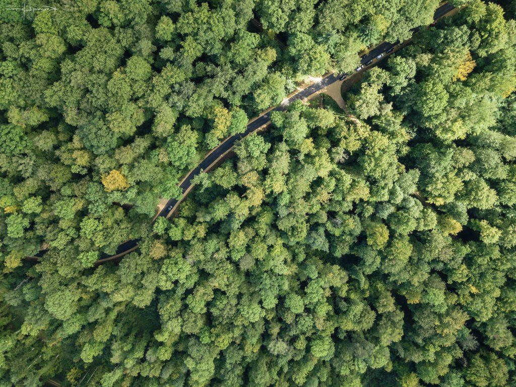 Maisprach Wald