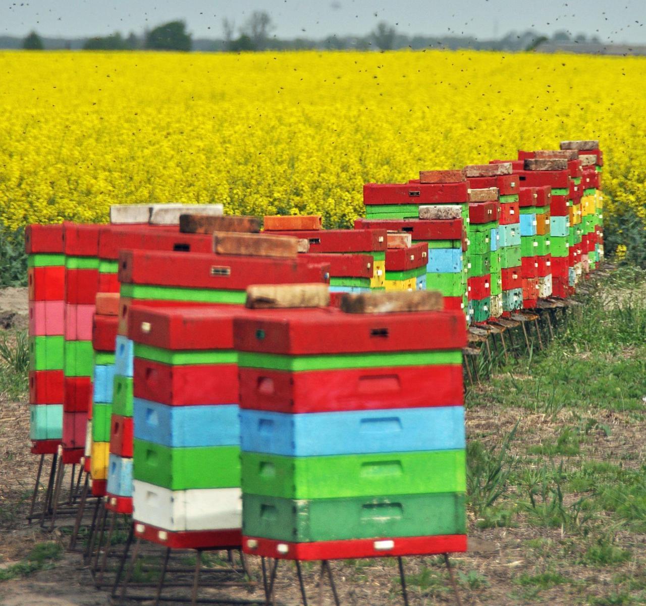 Bienenstöcke im Rhein Main Gebiet bei Neu-Isenburg