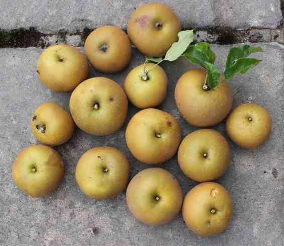 Gluten-Free Vegan Apple Pie Sundae