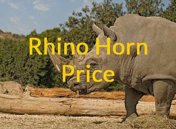 Rhino Horn Price – How much is a Rhino Horn Worth?