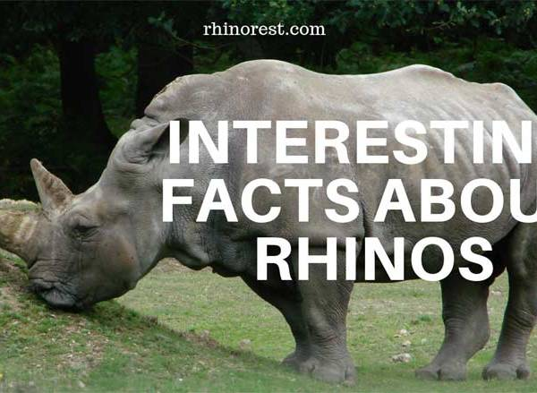 Interesting Facts about Rhinos You Should Know
