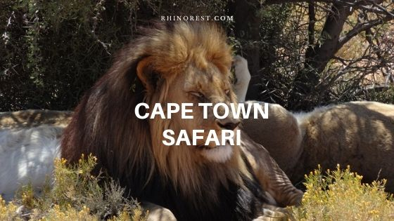 What You Must Do to Complete a Cape Town Safari?