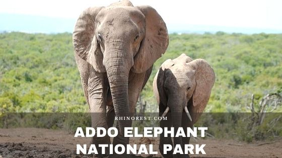 Addo Elephant National Park – Location | Animals | Safari