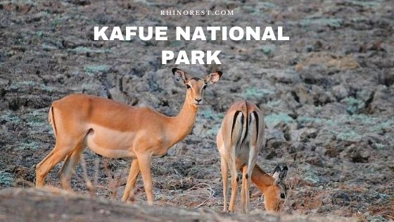 Kafue National Park Zambia – Animals | Weather | Travel