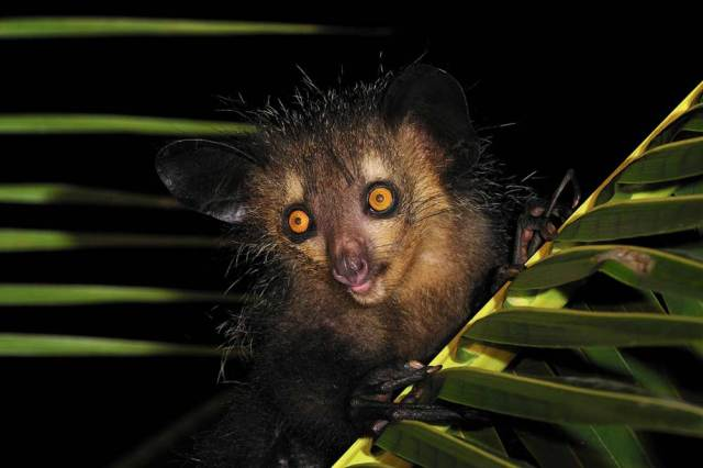 African-Nocturnal-Animals