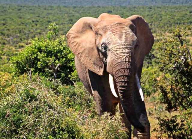 the big five facts facts about the big five facts about the big 5