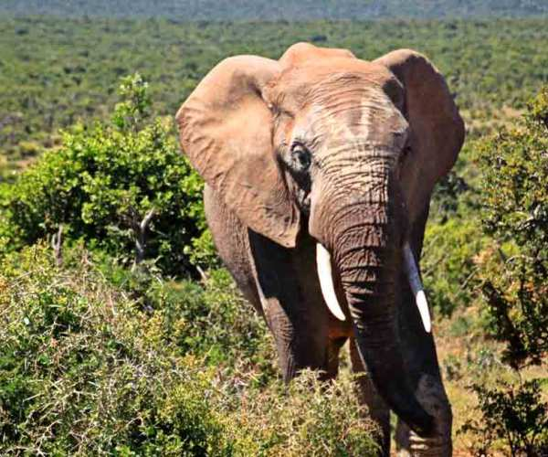 The Big Five Animal Facts – Why The Big Five Animals?