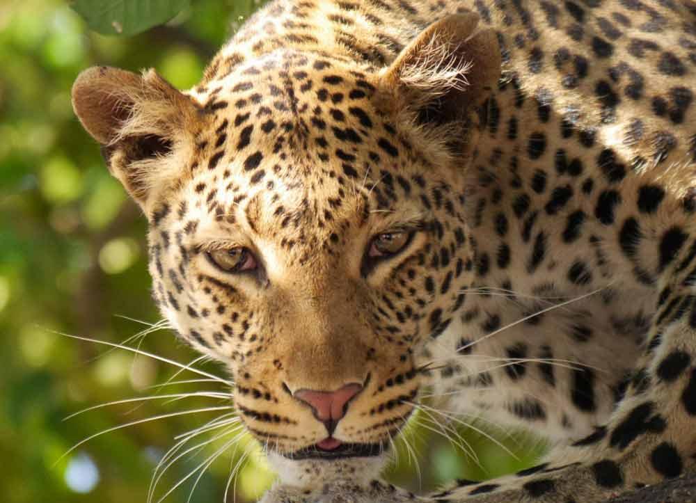 33 Exclusive Creatures Don't Miss In African Wildlife Safaris
