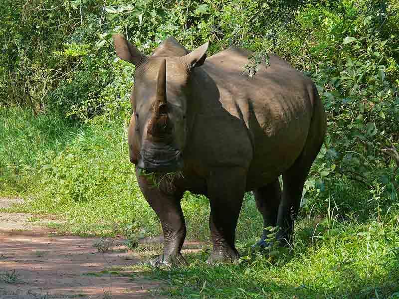 Ziwa Rhino Sanctuary – Wildlife | Location | Biodiversity | Travel