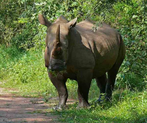 Ziwa Rhino Sanctuary – Wildlife | Location | Biodiversity | Travel