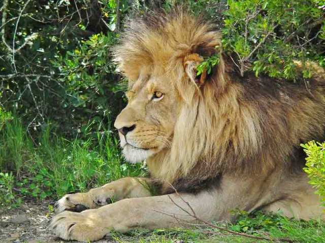 african wildlife conservation