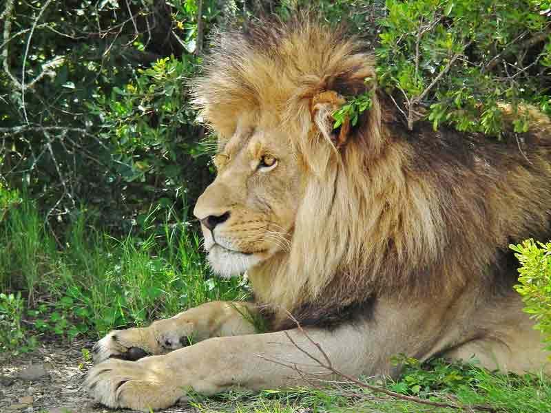 African Wildlife Conservation List – Ecosystems   Biodiversity