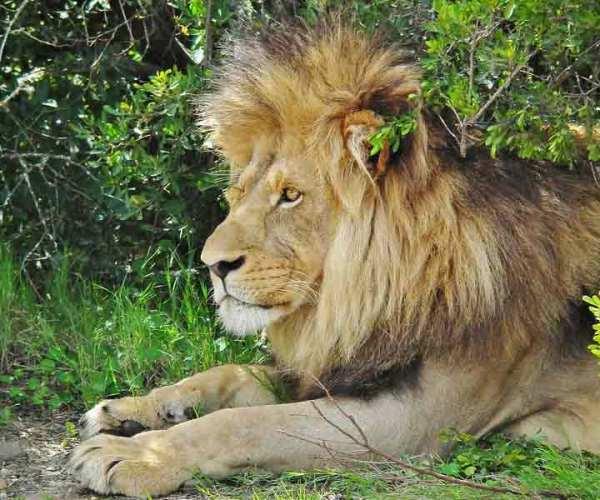 African Wildlife Conservation List – Ecosystems | Biodiversity
