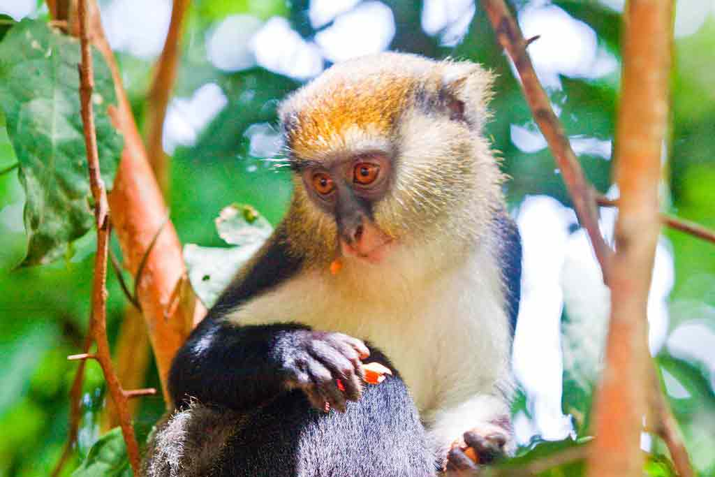 Ghana Wildlife – Biodiversity   Conservation   Sanctuaries
