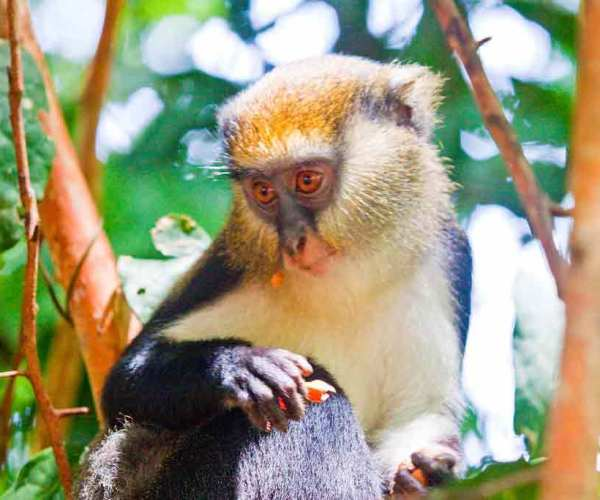 Ghana Wildlife – Biodiversity | Conservation | Sanctuaries