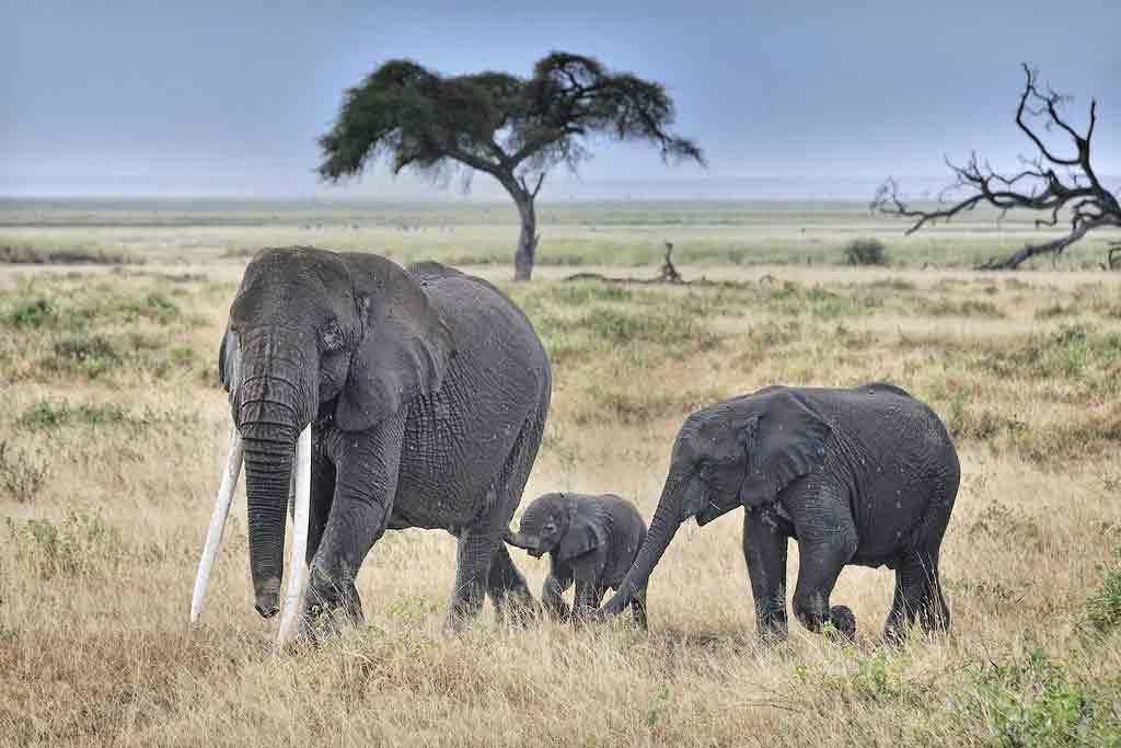 15 Kenya Tourist and Safari Attractions Everyone Loves to Visit