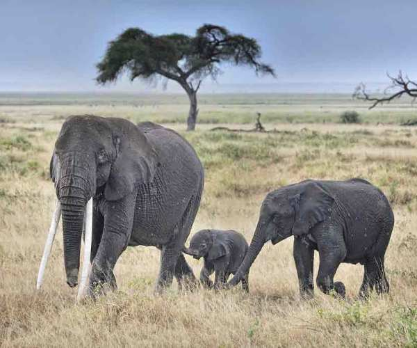 15 Kenya Tourist and Safari Attractions Everyone Loves to Visit