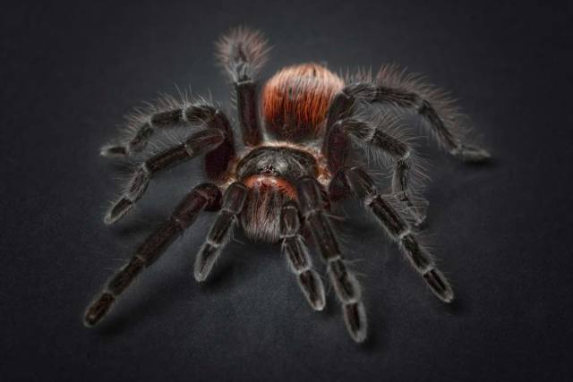 fun facts about spiders