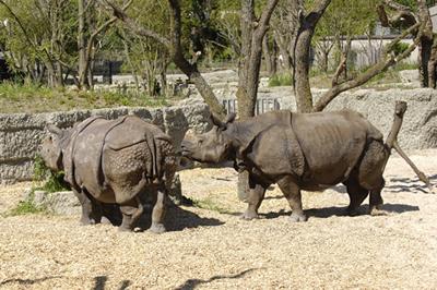 Ellora und Quetta in der Außenanlage (Foto: Zoo Basel)