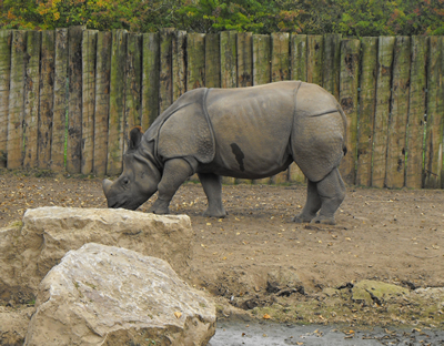 Patna, 27. September 2009, Zoo Chester (Foto: Lee McCarthy)