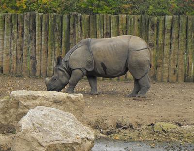 Patna, 27. September 2009, Zoo Chester (Foto: Lee McCarthy)