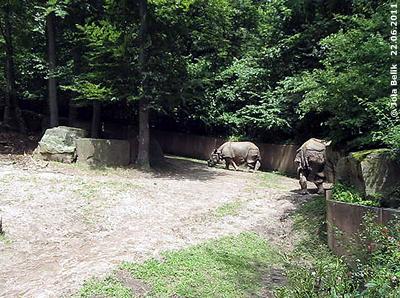 SEto Paitala (li) und Mama Purana (re) im hinteren Teil der großen Außenanlage, Tiergarten Nürnberg, 22. Juni 2011