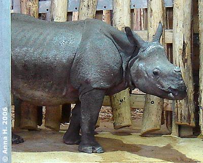 Sundari in der Innenanlage, 8. April 2006