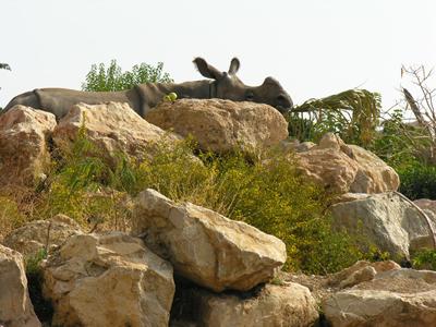 Rhino in der Außenanlage, 10. Oktober 2006 (Foto: Terra Natura Benidorm)