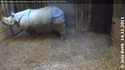 Saar im Stall, 14. November 2011 (Screenshot von Webcam)
