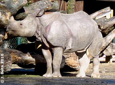 Sundari, 23. Februar 2010